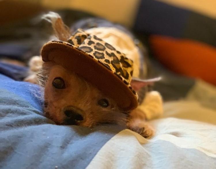 Красотка так очаровала свою нынешнюю хозяйку, что та оставила ее у себя. Фото: страница Вконтакте реабилитационного центра бездомных животных города Шахты «Святобор».