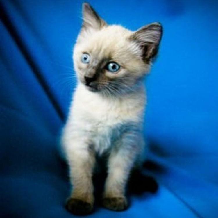 Ольга взяла Лялю, когда ему было месяц, она влюбилась в его голубые глаза. Фото: личный архив.