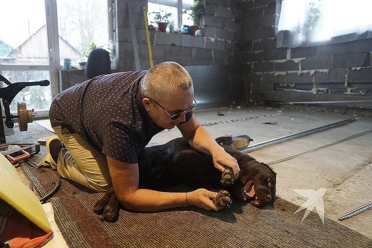 Собаке-поводырю Барри делают массаж. Фото: Марс Гафуров