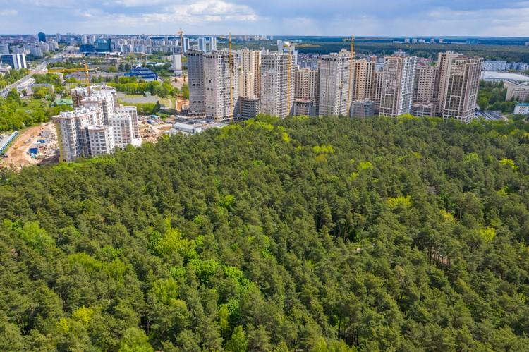 Под окнами комплекса – более 170 гектаров лесного массива.