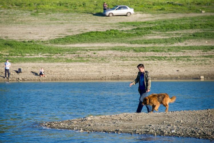 Владельцы собак тоже вывели питомцев на праздничную прогулку