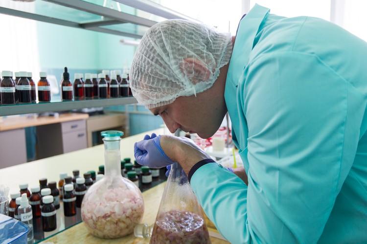 Специалисты не просто наслаждаются ароматом, а проверяют его на соответствие определенным критериям