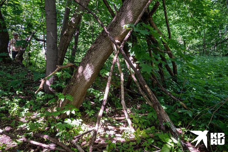 Мы обошли еще несколько таких построенных вокруг стволов деревьев «шалашей» высотой примерно в полтора метра.