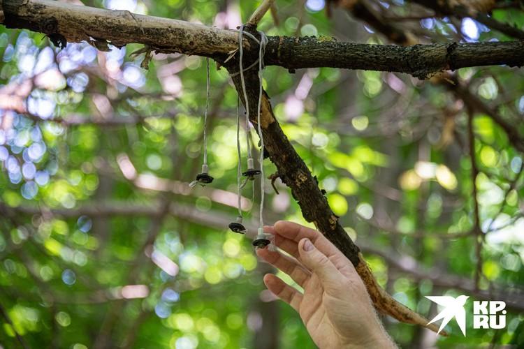 В другом месте мы обнаружили несколько деревяшек, подвязанных на какие-то веревочки к веткам.