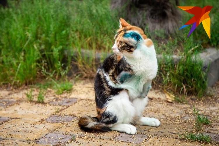 Лаки самостоятельная кошка - она научилась ходить на двух лапах