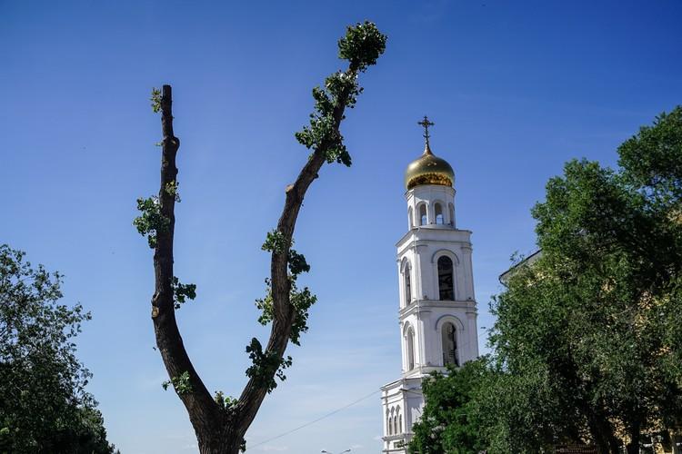 Дерево-рогатка на улице Вилоновкой