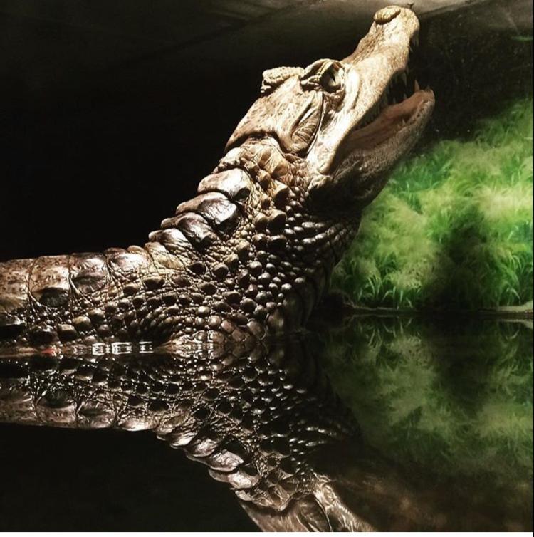 Рептилию назвали Геной, зубастик наводит страх на людей. Фото: Предоставлено героями материала