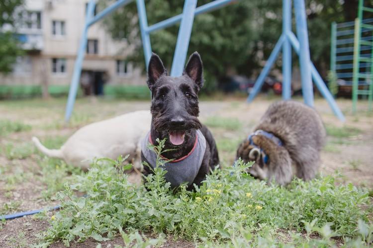 Между собой животные Евгении хорошо ладят. Вместе им весело.