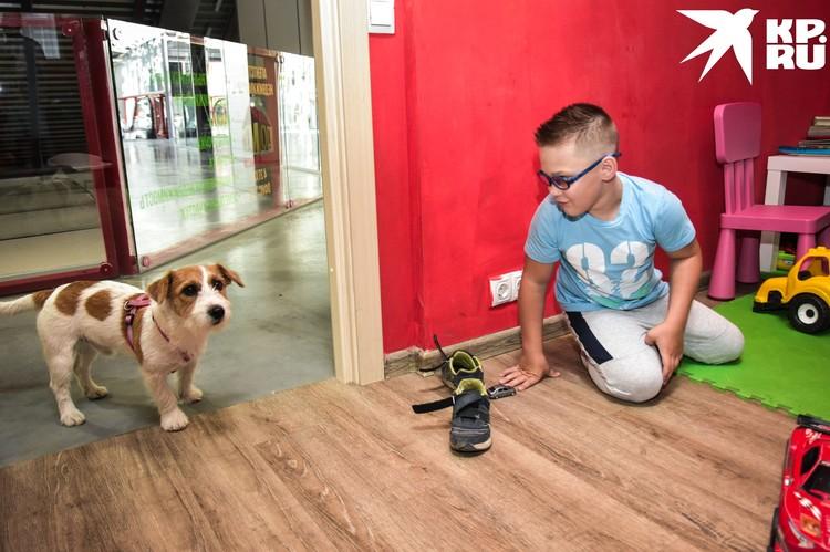 Собака любит поиграть с ребятишками и помогает успокоить их во время стрижки.
