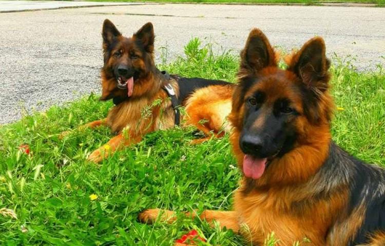 Свой первый в жизни перелет собаки перенесли отлично.