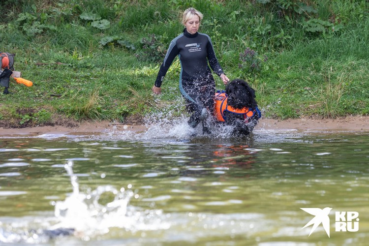 Прежде чем идти работать спасателям, животному нужно пройти курсы послушания.