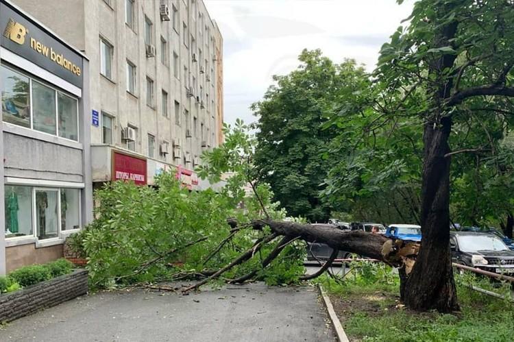 Ветер поломал каштан. Фото: AK_VDK, dps_vl