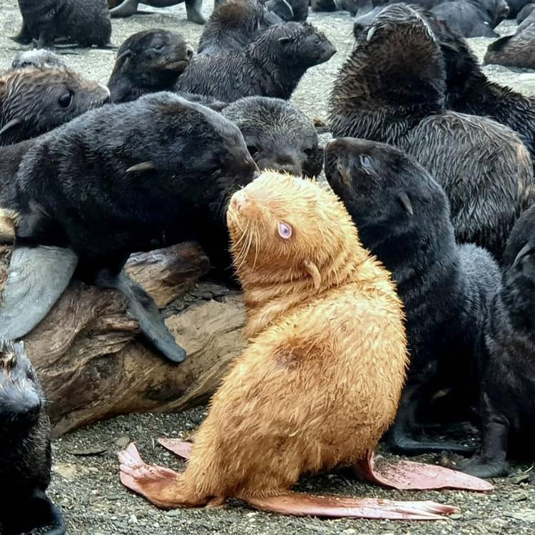 Красавец-тюлень, как говорят специалисты, в целом в хорошей форме. Фото: Владимир Бурканов