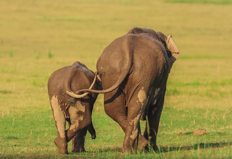 Дочки-матери. Национальный парк Корбетт, Индия. Фото: Jagdeep Rajput/Comedy Wildlife Photography Awards