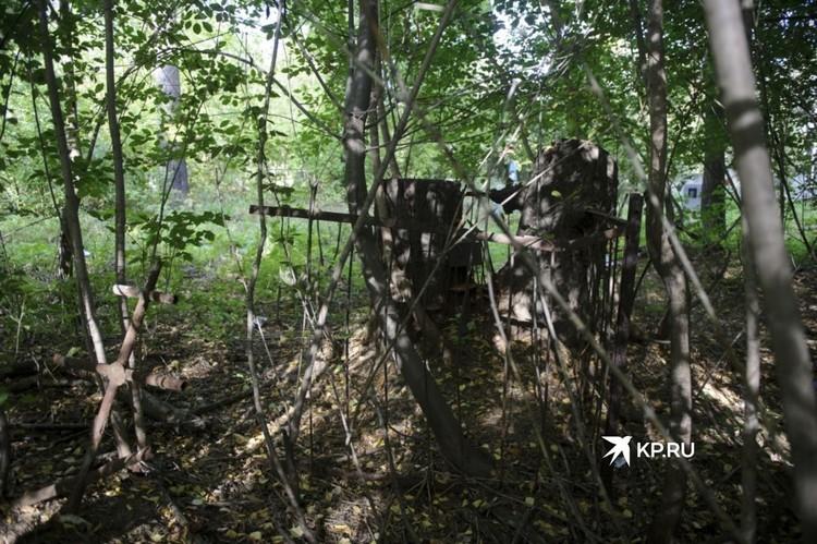 Деревья за десятки лет разрослись и «проглотили» старинные ограды у могил.