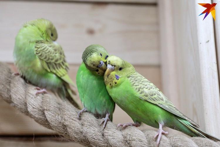 Попугаи помогают людям иногда развеяться.