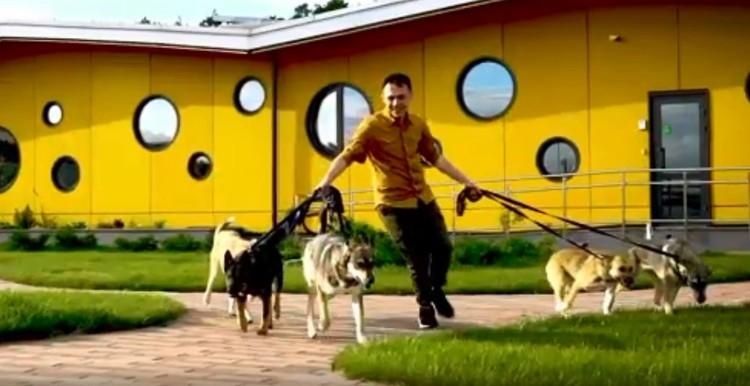В приюте Алексей выгуливал собак. Скриншот с видео программы «Волонтеры»