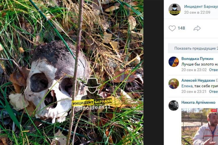 Найденный череп