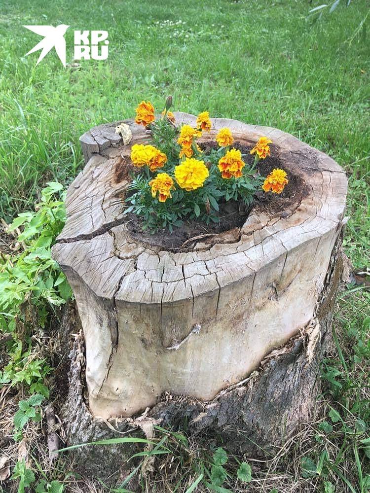В Константиново из каждого пня растут цветы