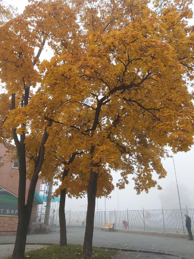 В осеннем тумане деревья смотрятся неестественно. Фото: vk.com / Наталья Анфалова