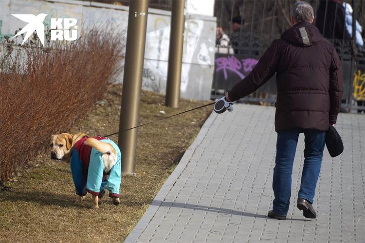 """Догхантер - хозяевам домашних псов: """"Надевайте намордник - и все будут счастливы. И хватит выгуливать животных во дворе на газоне""""."""