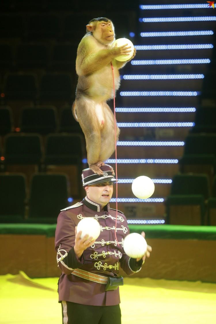 Уникальный номер - жонглирование человека и обезьяны