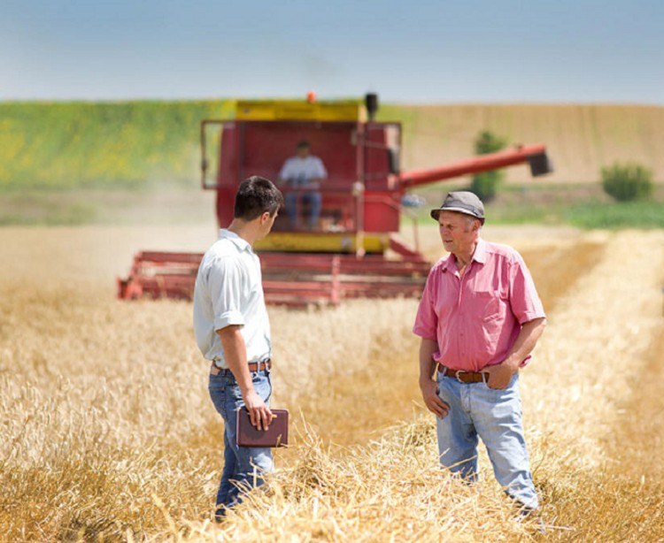 Для жителей 89 стран мира пшеница является основной злаковой культурой, которую используют в пищу.