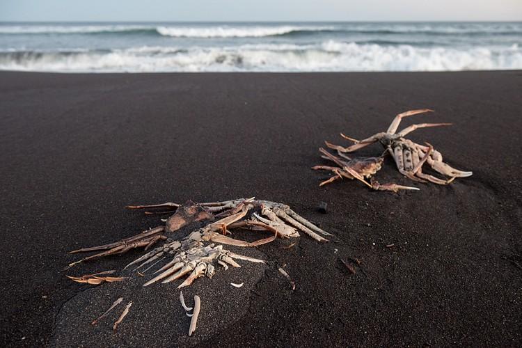 Морские млекопитающие не погибли. То, что погибло большое количество донных беспозвоночных, природа очень быстро восстановит