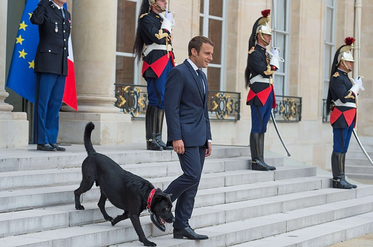 У президента Франции Эммануэля Макрона есть собака по кличке Немо