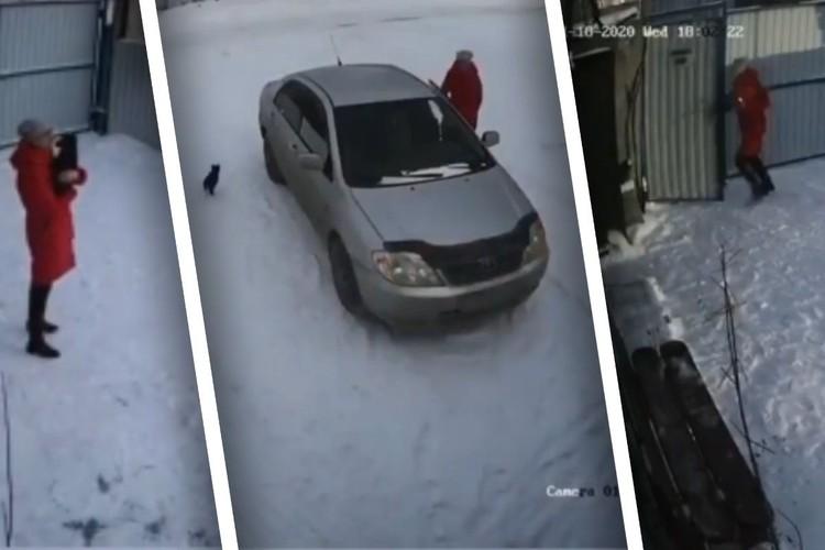 Как девушка подбрасывает собаку к приюту, засняли камеры наблюдения.