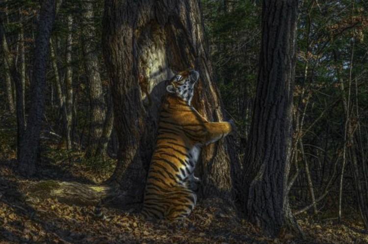 Тот самый снимок-победитель «Объятия». Фото: © Sergey Gorshkov, Wildlife Photographer of the Year 2020