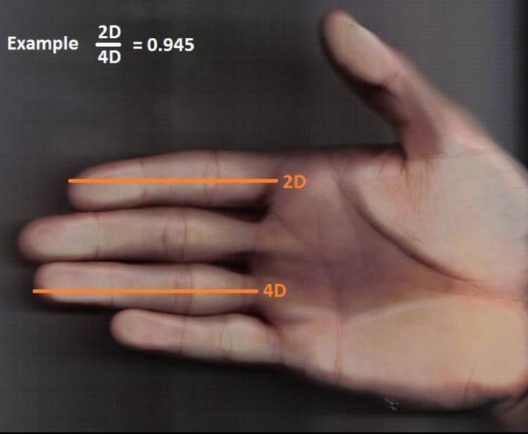 Пальцевый индекс: измерить и поделить.