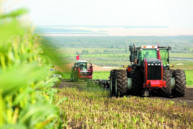В этом году у нас рекордный урожай