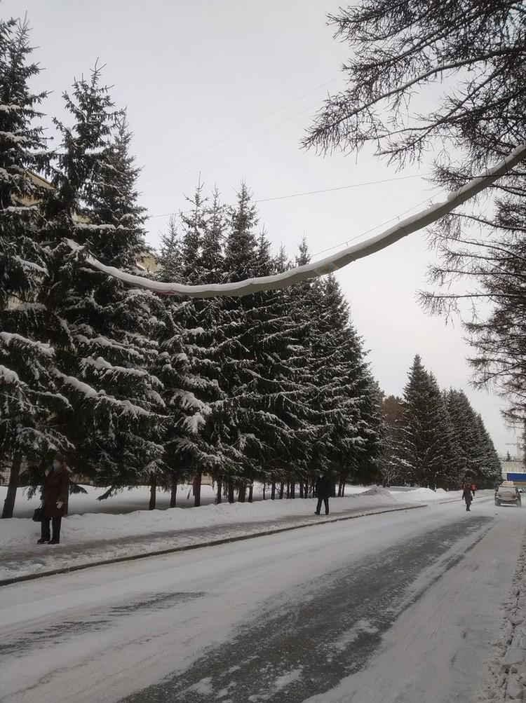 Первый в России надземный переход для белок появился в Краснообске в прошлом году. Фото: Мария Попова.