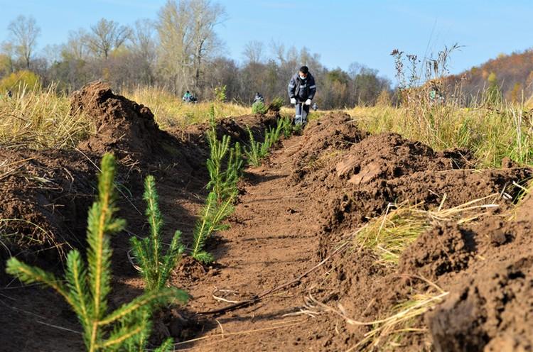 В одном только Бирском зоологическом заказнике в 2020 году башкирскими нефтяниками было высажено более 17 тысяч деревьев