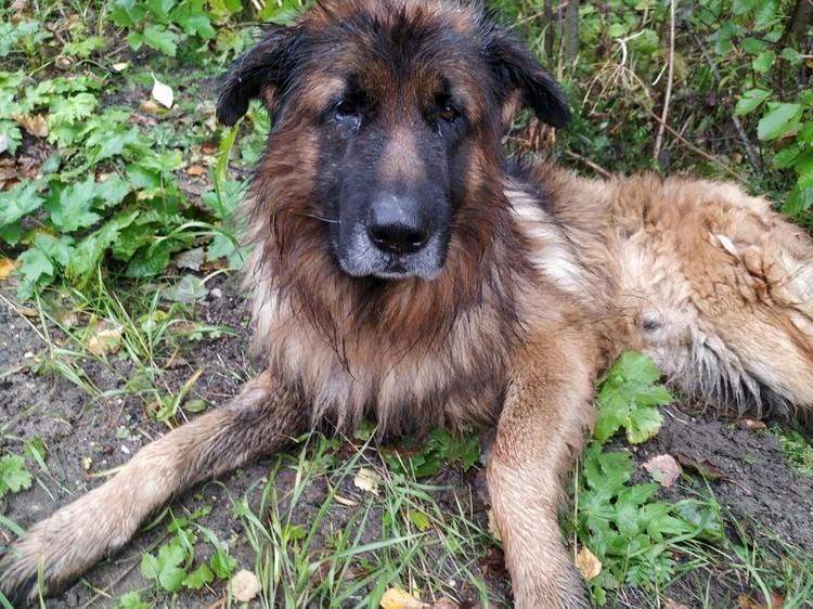 Пёс Кирюша обрёл новую семью, которая его не предаст. Фото: вк.