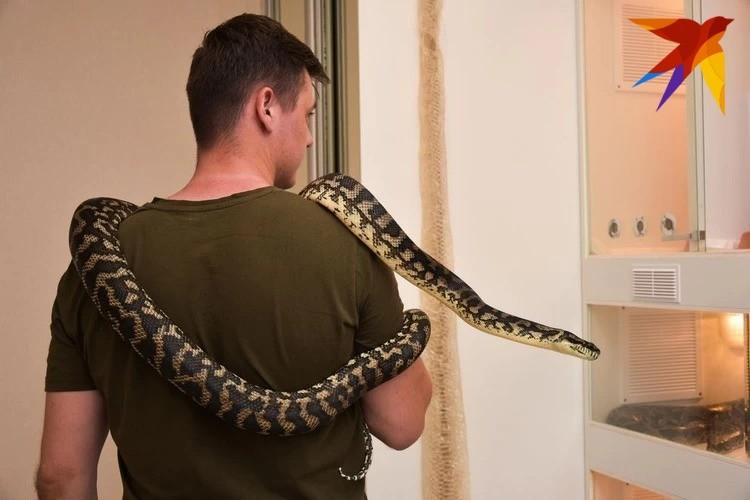 Содержать змей дома будет запрещено законодательно. Фото: Алена МАРТЫНОВА