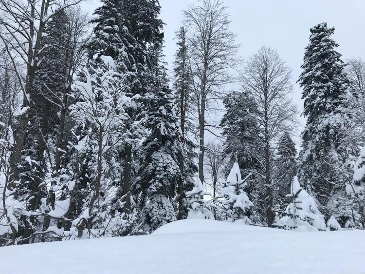 Зимняя Красная Поляна