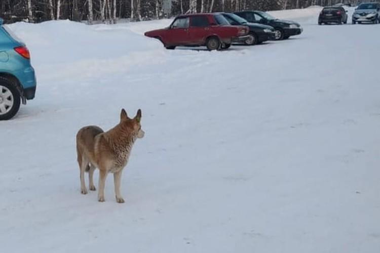 Розовая собака из Дзержинска оказалась фейком.