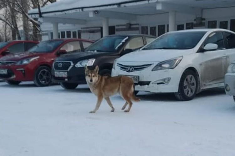 Администрация все равно намерена проверить состояние животных. Фото: администрация Дзержинска