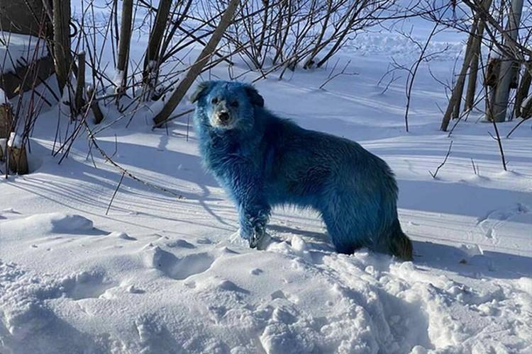 Недавно в Дзержинске изловили стаю голубых собак. Фото: Алексей Ганин