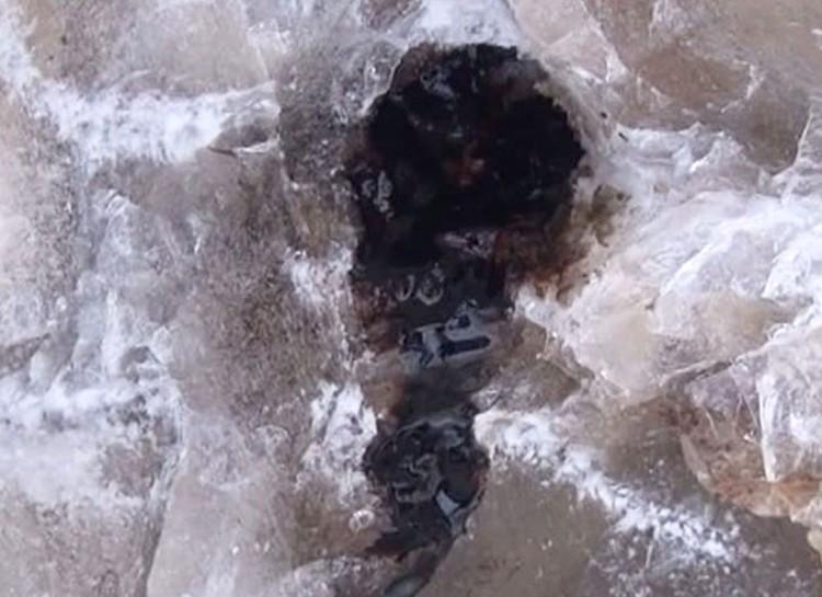 Кровь мамонта не замерзает при отрицательных температурах