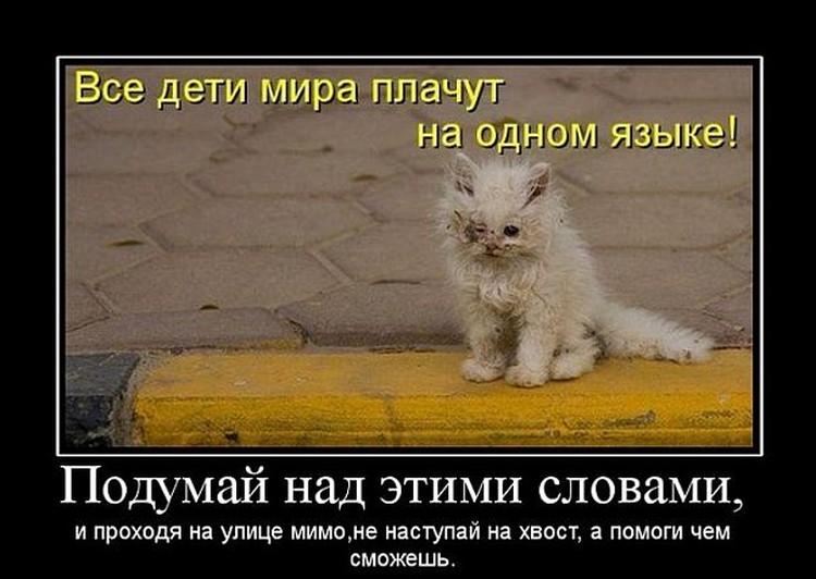 Про бездомных животных создают демотиваторы