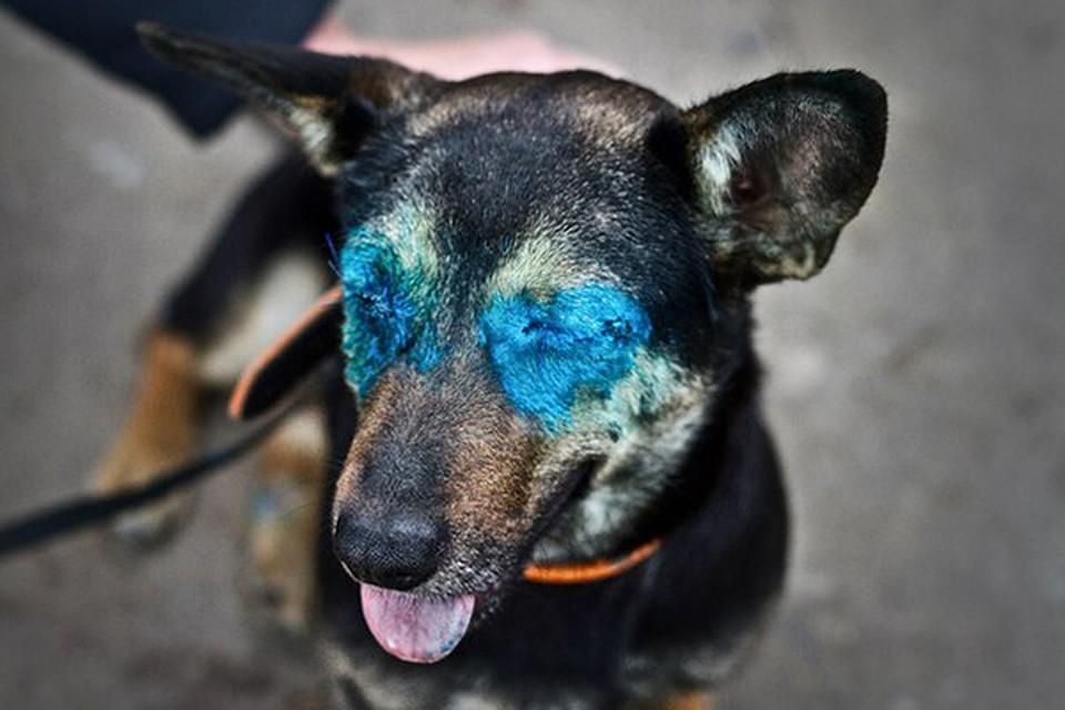 слепая собака фото обложки это вырезка