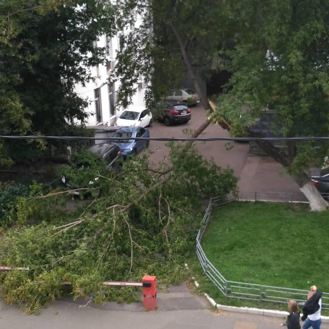 От урагана поломалась дерево #ураган Полчаса наблюдала, как группа рукастых мужчин сперва доламывали эту ветку, а потом ломали на части и убирали с дороги. Хорошо наблюдать, как другие работают ))