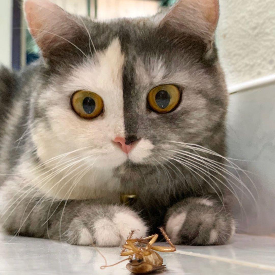 Лучший друг кошки - таракан Питер